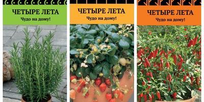Огород на балконе или подоконнике: особенности домашнего огородничества
