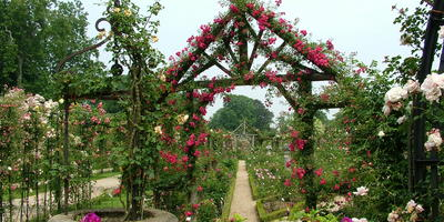 Классический случай: использование элементов регулярного стиля при создании розария