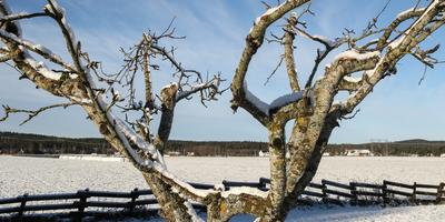 Нужен ли саду прошлогодний снег?