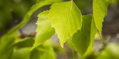 Какие лекарственные растения заготавливают в мае