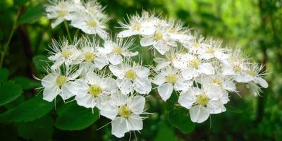 Цветущий май. На пороге лета