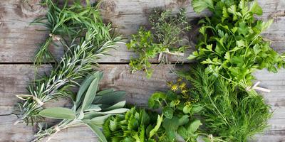 Рецепты здоровья: пряные травы при ожирении
