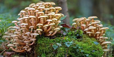 7 опасных для здоровья мифов о грибах