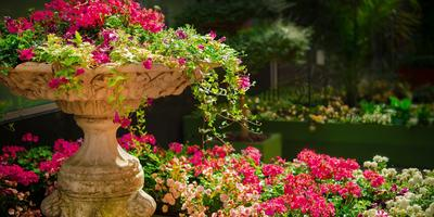 8 видов удачи, или Правила фэн-шуй для вашего сада