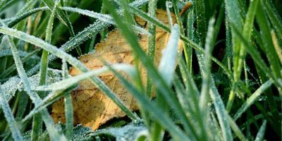 Рецепты здоровья: пырей - сорняк, который лечит