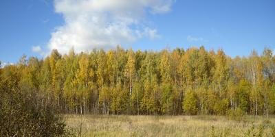 Осень в золоте и серебре