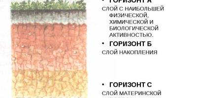 Земельный вопрос, или Все, что нужно знать о почве начинающему садоводу