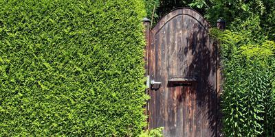 Как подобрать растения для живой изгороди: пошаговая стратегия выбора