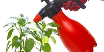 Выгодные покупки для защиты любимых растений