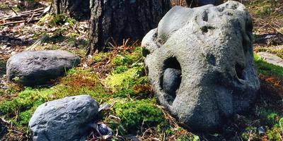 О камнях, их жизни в саду и отношениях с садоводом