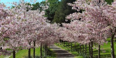 Цветы в плодовом саду: что можно посадить и как ухаживать