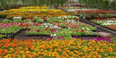 Как правильно выбрать цветочную рассаду