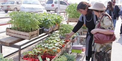 Как правильно выбрать и купить рассаду
