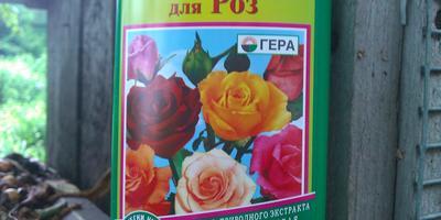 Удобрения для клубники и роз