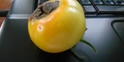 Что с нашей помидоркой?