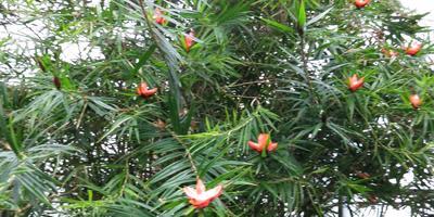 Неизвестное в садах Дюпона