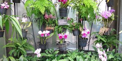 «Царство орхидей» в саду Дюпона