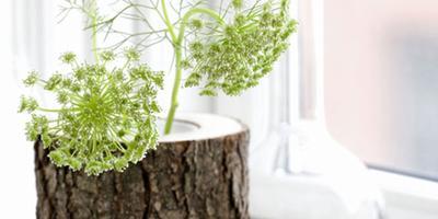 10 необычных ваз-красоток