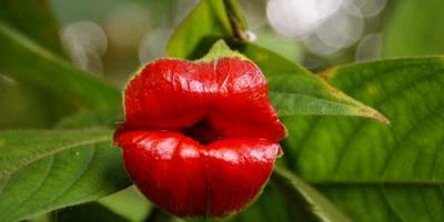 Всем поцелуйчик:)