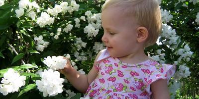 Цветет жасмин