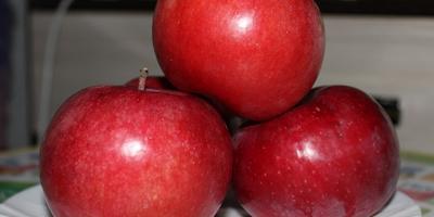 Хороши яблочки в этом году.