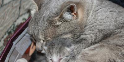 А у нас сегодня кошка родила вчера котят)))