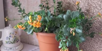 Цветы в доме - это красота и уют