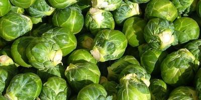 Как правильно ухаживать за брюссельской капустой?