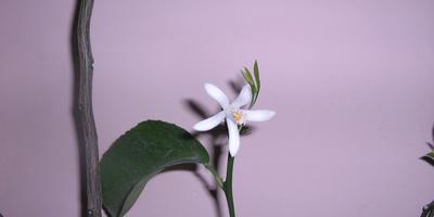 Догадайтесь: кто начинает цветение?