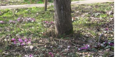 Весна приближается. Природа пробуждается.