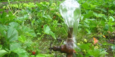 Вода на дачном участке самое главное оружие в борьбе за хороший урожай.