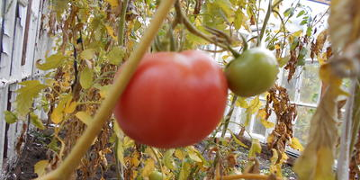 Осень. Последний урожай 2014 г.
