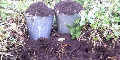 Как я заготавливаю землю для рассады