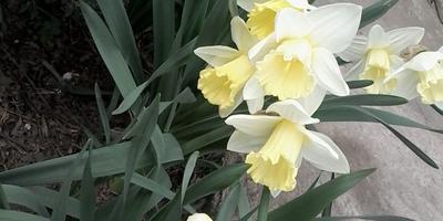 Цветы на моей даче и около
