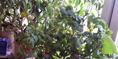 Что растет у меня на окне