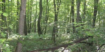 С шагомером Oregon Scientific PE208 по лесам, горам, за грибами и просто отдохнуть