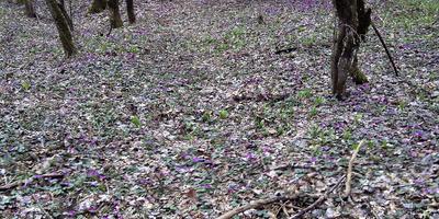 Весна в моём лесу