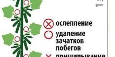 Друзья-приятели F1 и другие ультраранние огурцы на Seedspost.ru