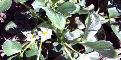 Начало весны на даче