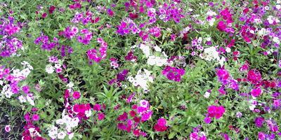 В моём саду-огороде. Начало лета