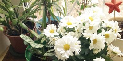 Мои любимые цветы...)