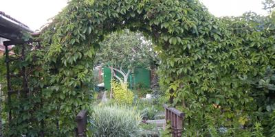 Новая жизнь старого сада.