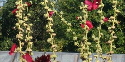Чудо-цветок