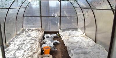 Какое самое подходящее время для высадки рассады в теплицу?
