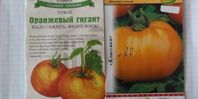 """+31 в тени и томаты """"Оранжевый гигант"""""""