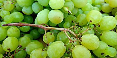 Не было печали - посадили виноград ... давно посадили