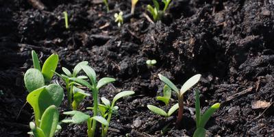 5 декабря - Всемирный день почв