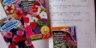 Семена получила: о петуниях, тестировании и соседке Свете