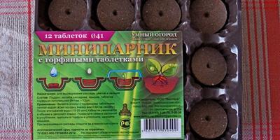 Петуния Василиса Премудрая F1. Этап II. Настоящие листья