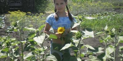 Все лето на огороде